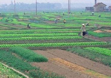 Chuyển nhượng quyền sử dụng đất nông nghiệp được không?