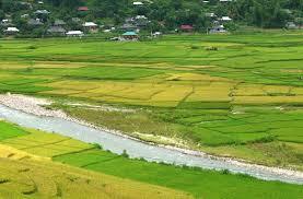 Điều kiện để chuyển mục đích sử dụng đất trồng lúa?