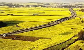 Căn cứ xác định việc sử dụng đất ổn định, lâu dài?
