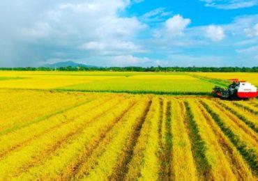 Khi hết hạn sử dụng đất nông nghiệp có phải gia hạn?